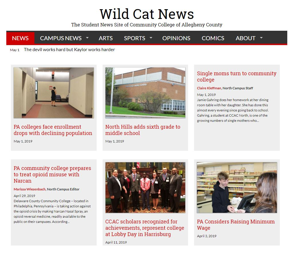 Wild Cat News Image